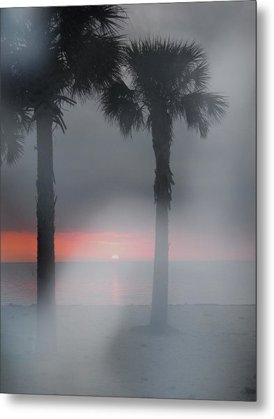 Palm Trees In The Fog Metal Print by Penfield Hondros