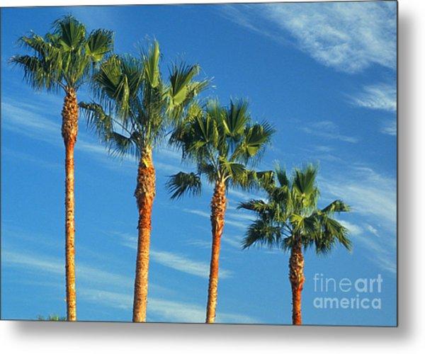 Palm Trees Metal Print by Marc Bittan