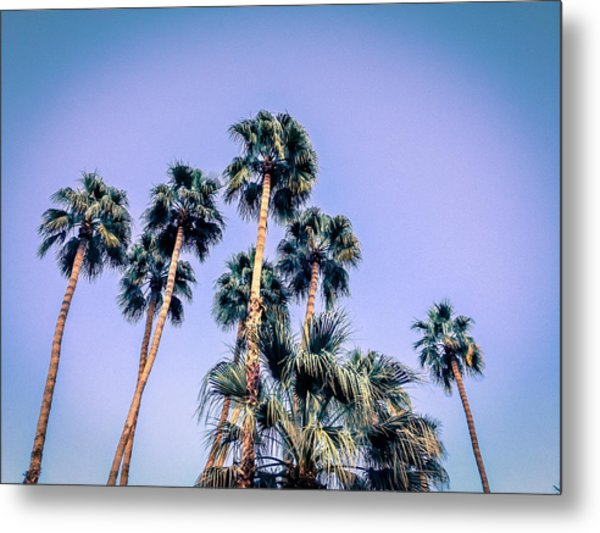 Palm Trees Palm Springs Summer Metal Print