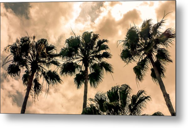 Palms Against The Sky Metal Print
