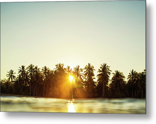 Palms And Rays Metal Print