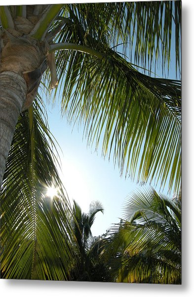 Palms Metal Print by Audrey Venute