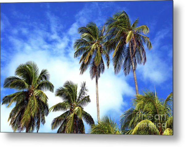 Palms Metal Print by John Rizzuto