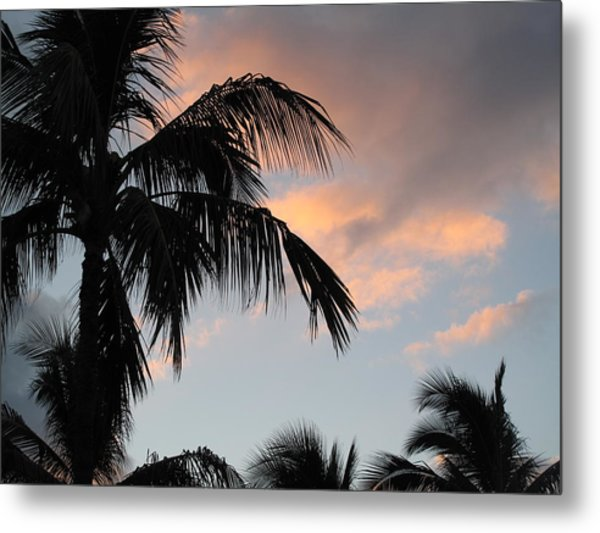 Palmset Photograph By Angie Papple