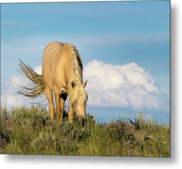 Metal Print featuring the photograph Palomino Wild Stallion In The Evening Light by Nadja Rider