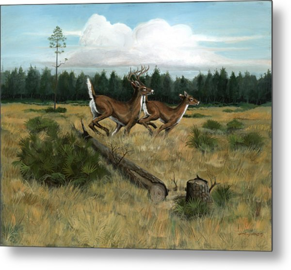 Panhandle Deer Metal Print by Timothy Tron