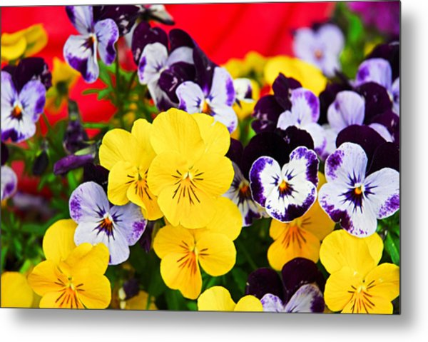 Pansies And Red Cart Metal Print