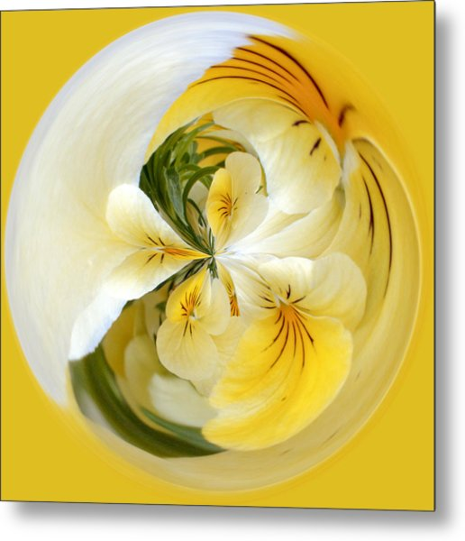 Pansy Ball Metal Print by James Steele