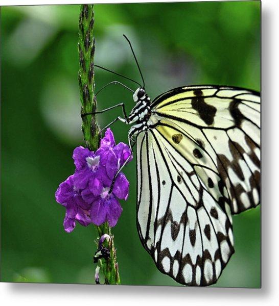 Paperkite Butterfly Closeup Metal Print