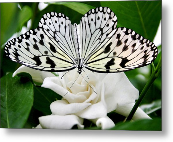 Paperkite On Gardenia Metal Print