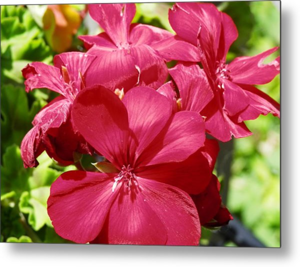 Paradise Bloom Metal Print