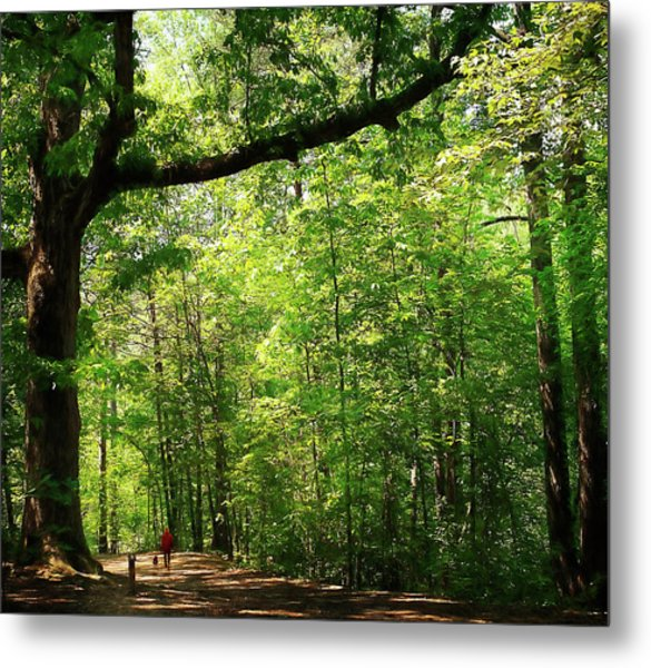Paris Mountain State Park South Carolina Metal Print