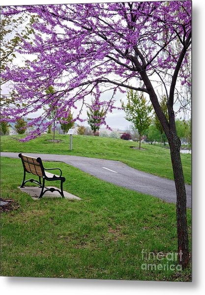 Metal Print featuring the photograph Park Bench With Redbud Tree Winona Mn By Yearous by Kari Yearous