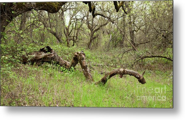 Park Serpent Metal Print