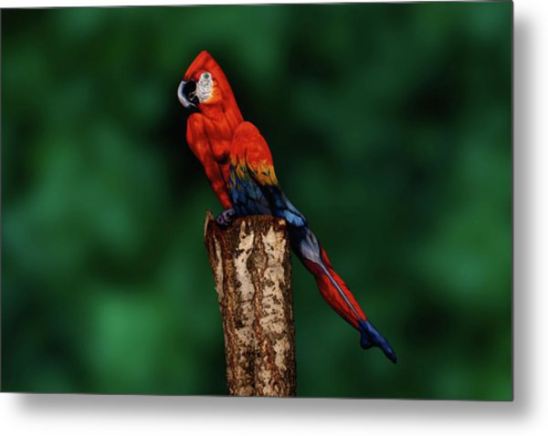 Parrot Bodypainting Illusion Metal Print