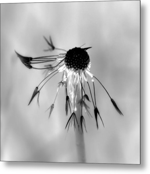 Partial Dandy Metal Print