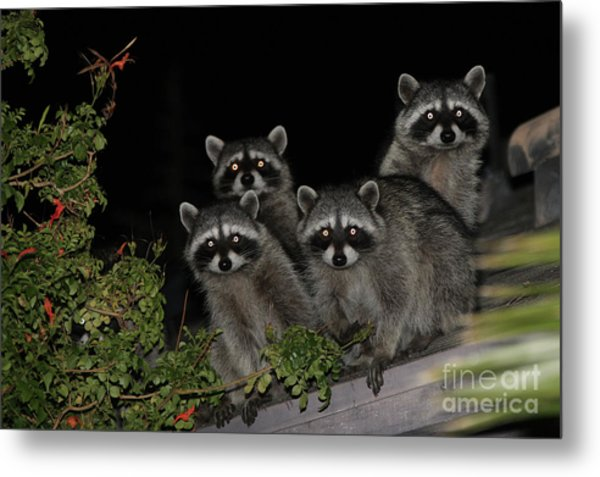 Party Of Five On The Roof Top Metal Print