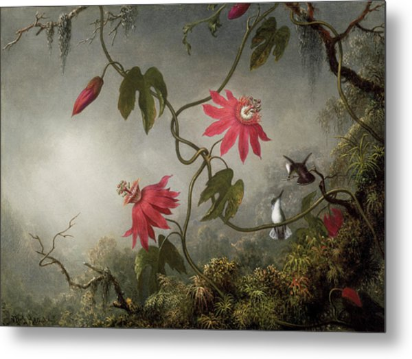 Passion Flowers And Hummingbird Metal Print
