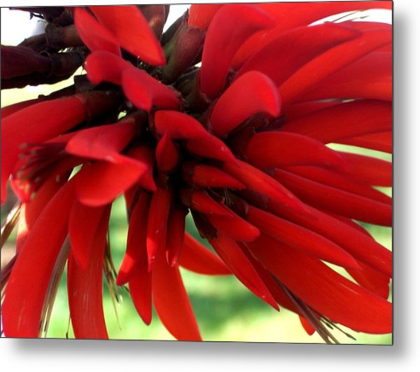 Passionate Red Metal Print by Jean Booth