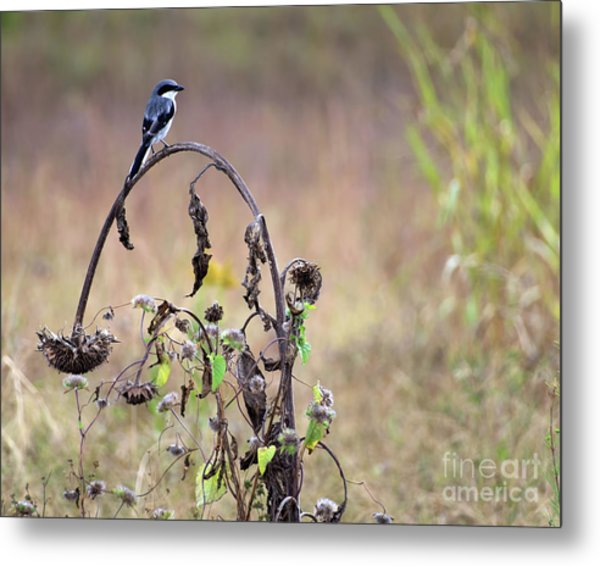 Pastoral Scene Bird On Sunflower Metal Print