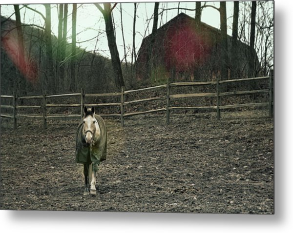 Pasture Pony Metal Print by JAMART Photography