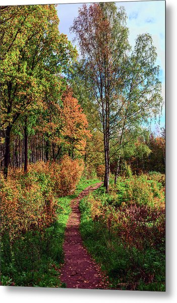 path in a beautiful country Park on a Sunny autumn day Metal Print