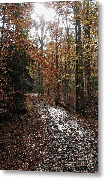Path In The Autumn Color Metal Print by Hideaki Sakurai