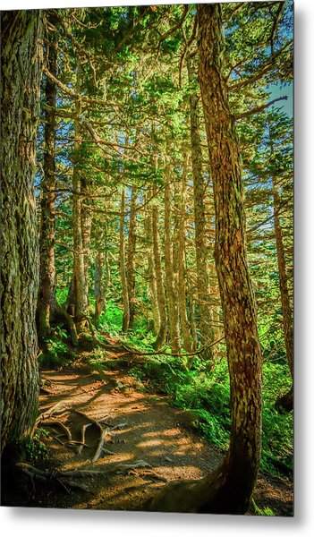 Path In The Trees Metal Print