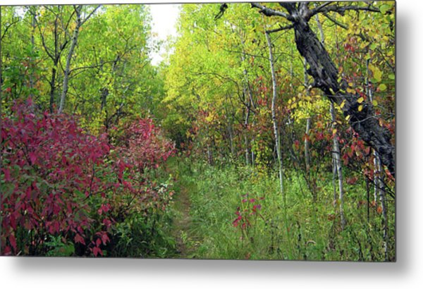 Path In The Woods 8 Metal Print