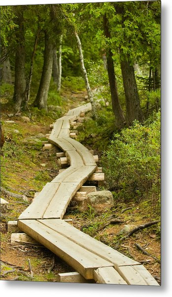 Path Into Unknown Metal Print