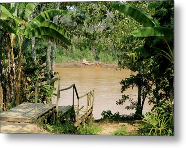 Path To The Amazon River Metal Print