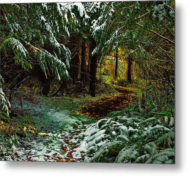 Path To The Light Metal Print by Wilbur Young