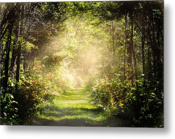 Pathway Metal Print by Gary Smith