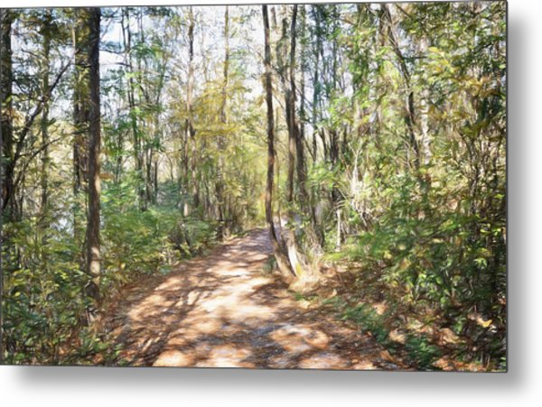 Pathway In The Woods Metal Print