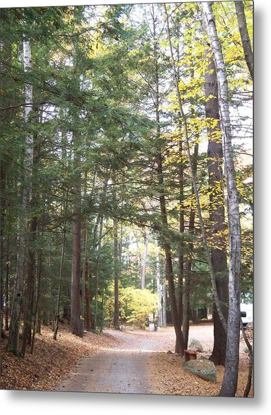 Pathway In The Woods Metal Print by Rosanne Bartlett