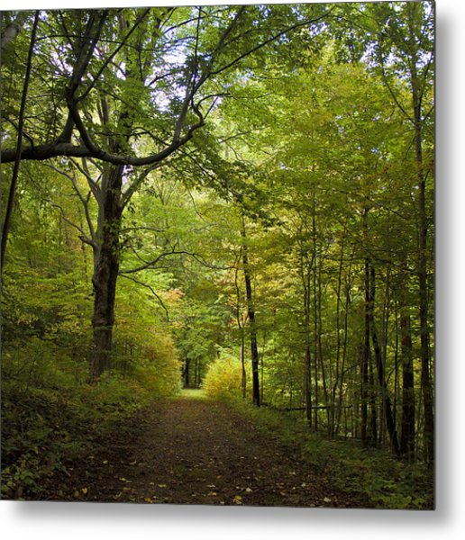 Pathway Lined By Trees Metal Print