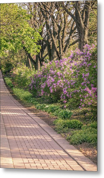 Pathway To Beauty In Lombard Metal Print