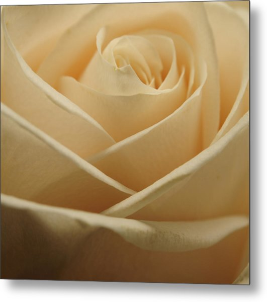 Patterns In Rose Petals  Off White Metal Print