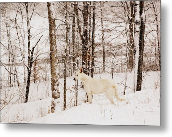 Pausing Metal Print by Cheryl Helms