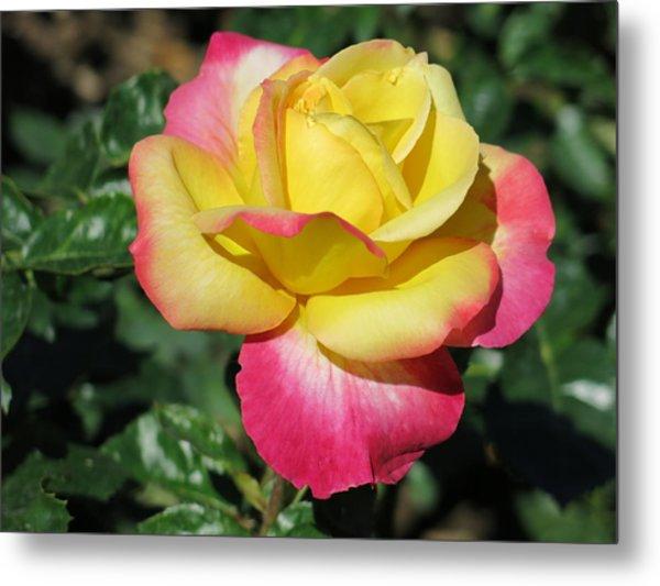 Peace And Love Rose Metal Print