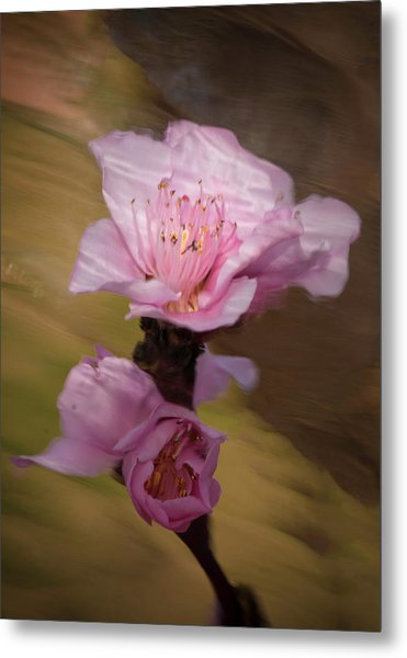 Metal Print featuring the photograph Peach Blossom Through Glass by David Waldrop