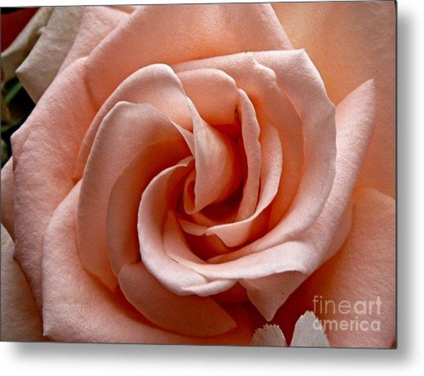 Peach-colored Rose Metal Print