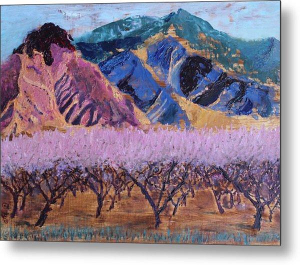 Peach Orchard Canigou Metal Print