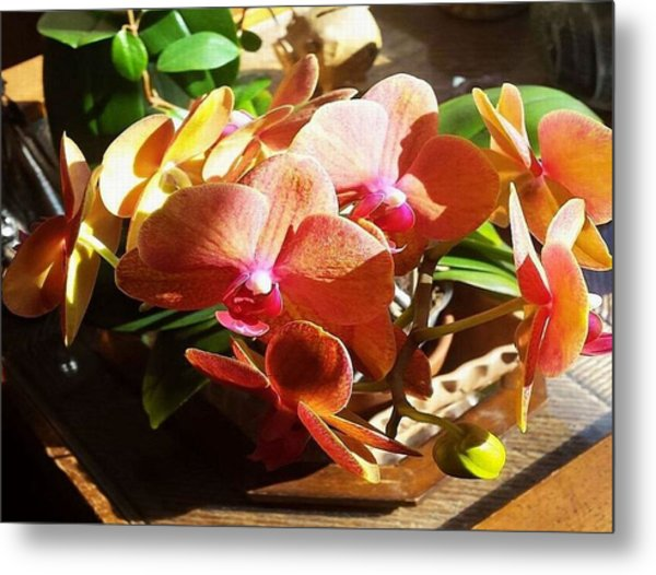 Metal Print featuring the photograph Peach Orchid Blossoms by Deb Martin-Webster