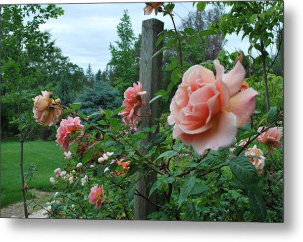 Peach Rose Metal Print by Linda Sramek