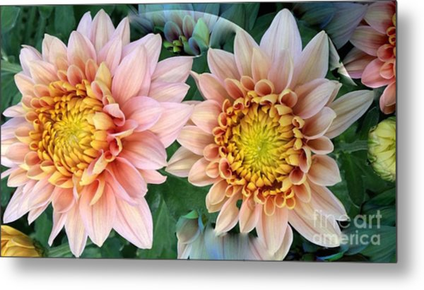 Peachy Chrysanthemums Metal Print