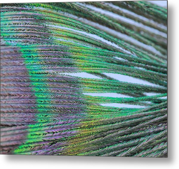 Peacock Abstract Metal Print