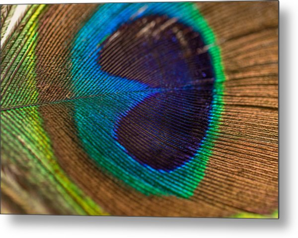 Peacock Feather Macro Detail Metal Print