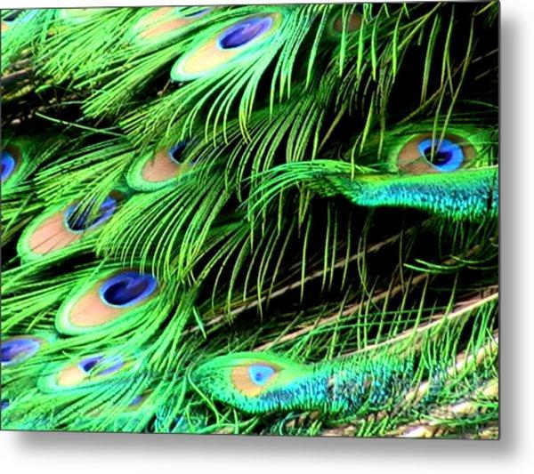Peacock Feathers Metal Print by Toon De Zwart