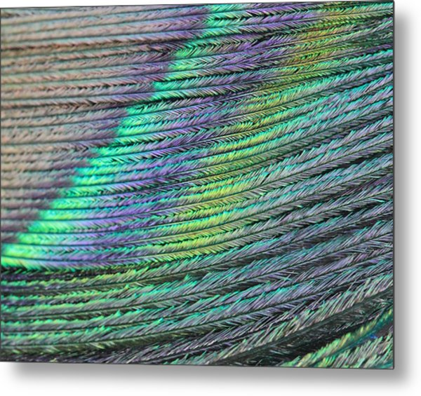 Peacock Stripes Metal Print